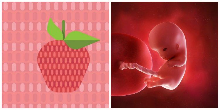 Sự phát triển của thai nhi tháng thứ 3