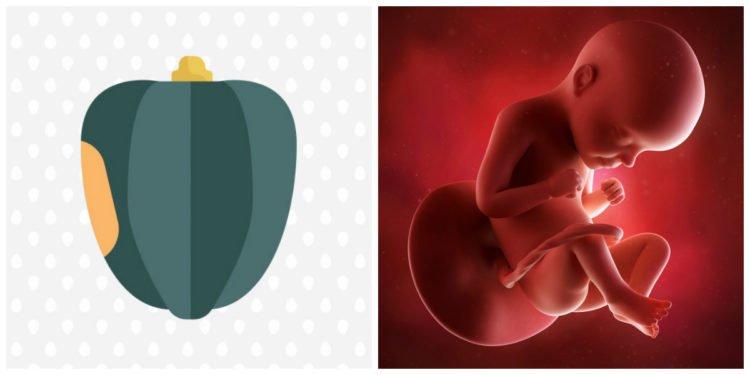 Sự phát triển của thai nhi tháng thứ 7